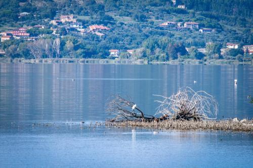lago Trasimeno83