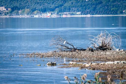 lago Trasimeno86